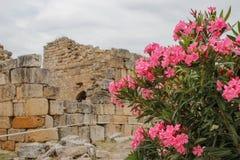 Ruiny starożytnego grka miasto Hierapolis w Pamukkale Denizli, Turcja i krzaku różowi kwiaty, zdjęcie royalty free