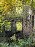 Ruiny staups mleją porosłego z drzewami Fotografia Stock
