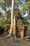 Ruiny Ta Prohm, Kambodża Fotografia Royalty Free