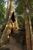 Ruiny Ta Prohm, Kambodża Zdjęcia Royalty Free