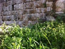 Ruiny w wiośnie Fotografia Stock