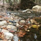 ruisseau Photo stock