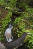Ruisseau C32 dans RMNP Photo stock
