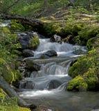 Ruisseau caché Images libres de droits