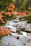 Ruisseau d'automne Photographie stock libre de droits