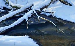 Ruisseau dans la forêt image libre de droits