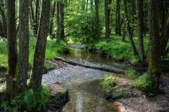Ruisseau dans la forêt pendant le début de la matinée Image libre de droits
