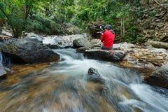 Ruisseau dans la forêt verte, courant de montagne photos libres de droits