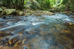 Ruisseau dans la forêt verte, courant de montagne photo stock