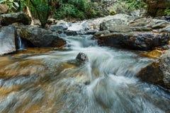 Ruisseau dans la forêt verte, courant de montagne image libre de droits