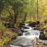 Ruisseau dans la forêt Images libres de droits