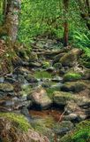 Ruisseau de forêt Images libres de droits