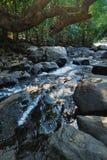 Ruisseau de forêt Photos stock