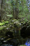 Ruisseau de forêt Images stock