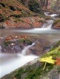 Ruisseau de forêt Photos libres de droits
