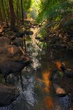 Ruisseau de montagne Image stock