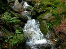 Ruisseau de montagne Photographie stock libre de droits