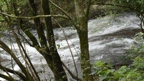 Ruisseau de parmi des arbres banque de vidéos