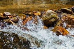Ruisseau en gros plan dans la forêt verte, courant de montagne Image stock