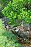 Ruisseau et centrale autour Image libre de droits