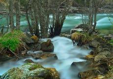 Ruisseau et rivière Photographie stock
