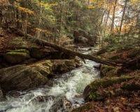 Ruisseau froid de montagne photographie stock libre de droits