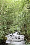 Watercourse beauty royalty free stock images