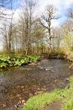 Ruisseau peu profond serpentant par la campagne Photographie stock