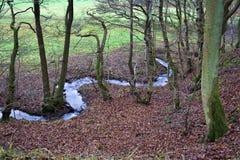 Ruisselet dans la forêt Photo stock