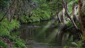 Ruisselet enchanté avec un courant lent dans une forêt profonde banque de vidéos
