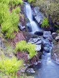 Ruisselet et fougère, réserve naturelle de Rogen, Suède Photographie stock libre de droits
