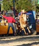Ruiter 2 van de stier royalty-vrije stock afbeelding