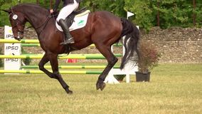 Ruiter met paard, die een hindernis springen stock video