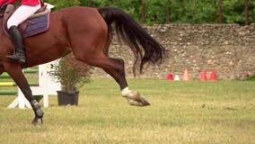 Ruiter met paard, die een hindernis springen stock footage