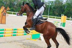 Ruiter op de sprongen van een kastanjepaard over een barrière in de springende concurrentie Stock Afbeelding