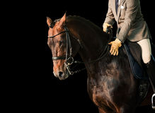 Ruiter op een paard Stock Foto
