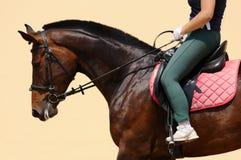 Ruiter op het paard royalty-vrije stock afbeeldingen