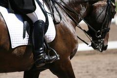 Ruiter op horseback. Stock Afbeeldingen