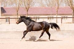 Ruiter paard Royalty-vrije Stock Foto's