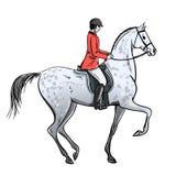 Ruitermens en vlek grijs paard op wit Ruiter in rood jasje op hengst stock illustratie