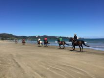 Ruiters op horseback op 90 Mijlstrand, Ahipara, Nieuw Zeeland Stock Foto's