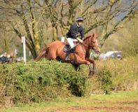 Ruitersport: paard het springen royalty-vrije stock afbeeldingen