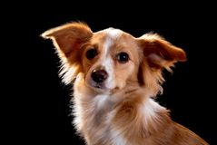 Ruivo bonito com um cão branco Fotos de Stock Royalty Free