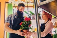 Ruivo fêmea e homem tattooed farpado que vende flores em um miliampère Imagens de Stock