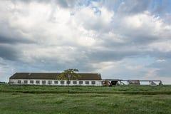 Rujnujący cowshed w polu, Ukraina Zdjęcie Stock