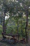 Rujnuje starych drewnianych krzesła w lesie zdjęcia stock