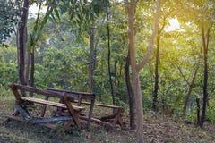 Rujnuje starych drewnianych krzesła w lesie zdjęcia royalty free