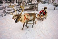 冬天赛跑在Ruka的驯鹿爬犁在拉普兰在芬兰 免版税图库摄影