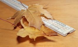 Ruler and yellow maple leaves Stock Photos