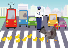 Rules of the road. The hen with her chicks go at a pedestrian crossing by a police and standing cars Stock Images